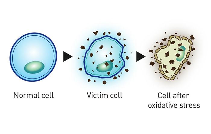 ACTIVE-HYDROGEN---2--Gel-50-ml-Forte-&-110-ml---MOCKUP-ENG
