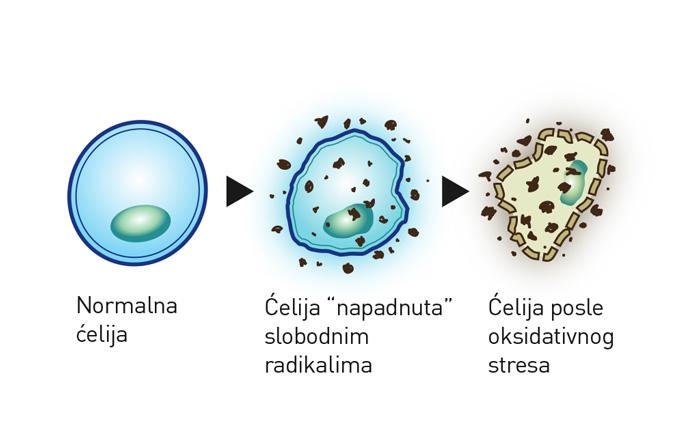 Napadnuta ćelija